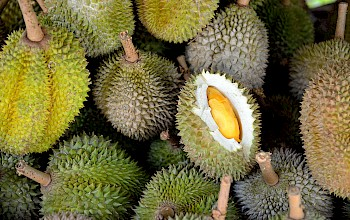 Durian - calories, nutrition, weight