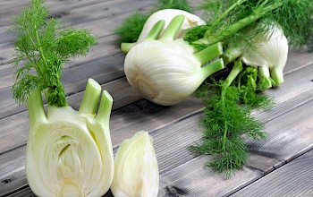 Fennel - calories, nutrition, weight