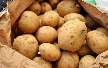 Potato - calories, nutrition, weight