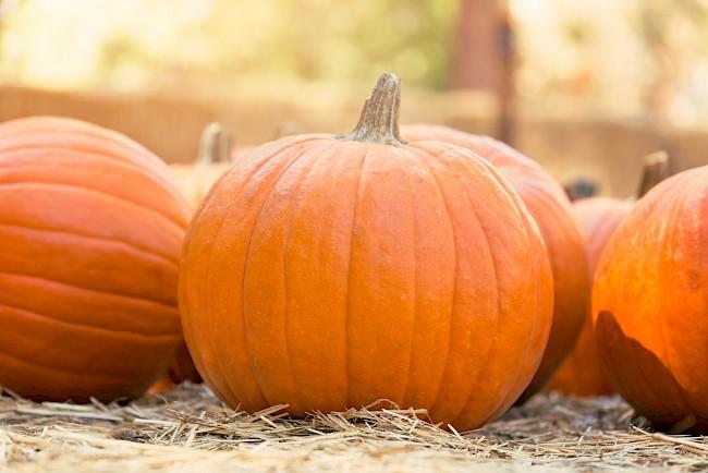 Pumpkin - nutrition, vitamins, minerals