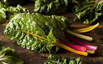 Chard - calories, nutrition, weight
