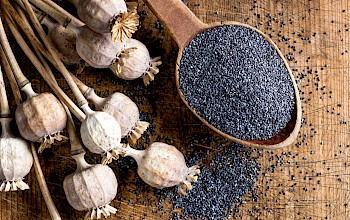 Poppy seed - calories, nutrition, weight