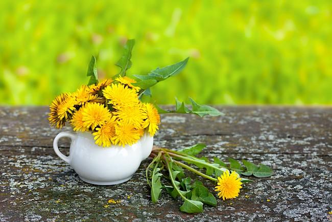 Dandelion - caloies, wieght