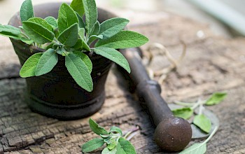 Sage - calories, nutrition, weight