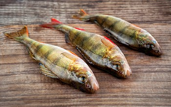 Perch - calories, nutrition, weight
