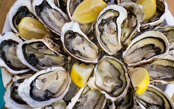 Oyster - calories, nutrition, weight